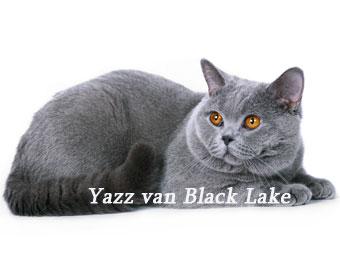 YAZZ van BLACK LAKE