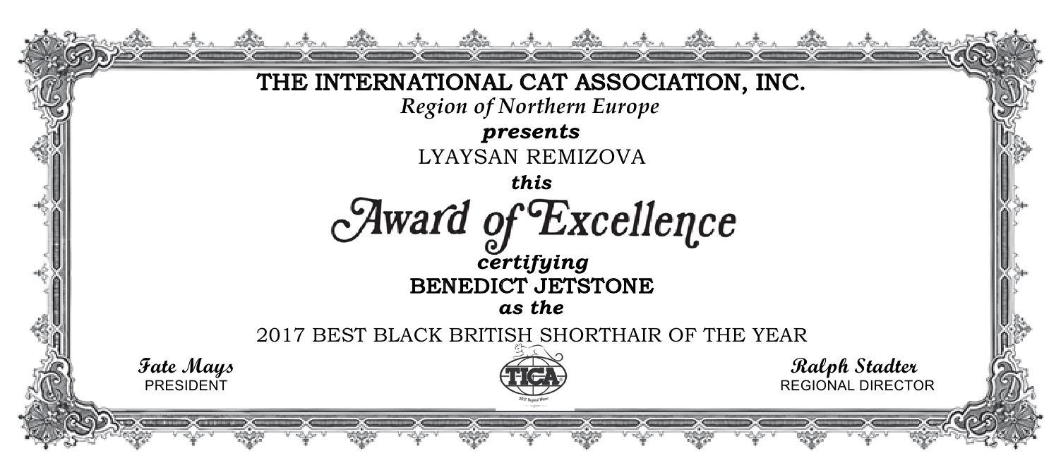 TICA BEST BLACK BRITISH SHORTHAIR OF THE YEAR