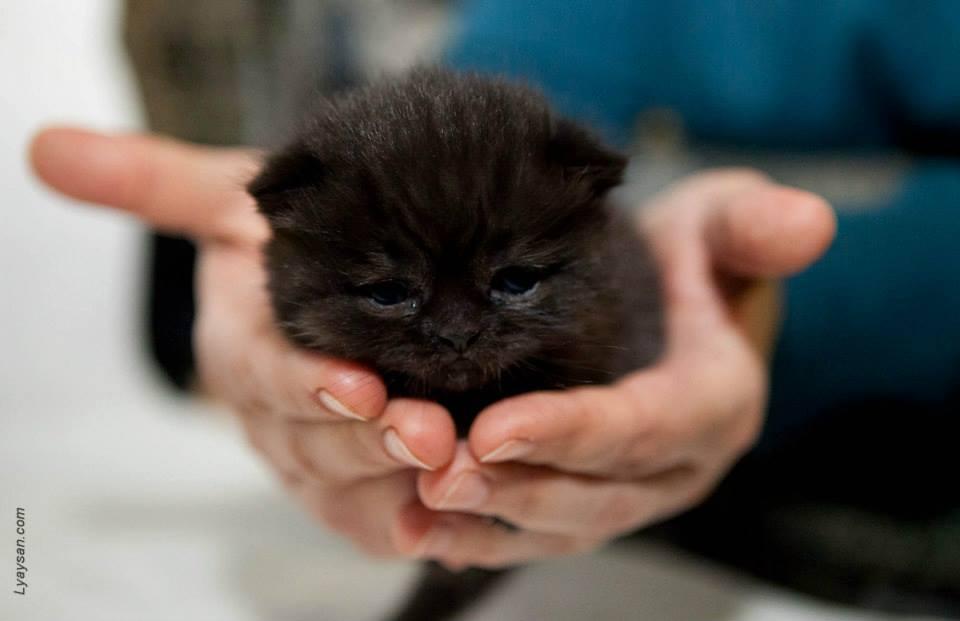день защиты черных кошек