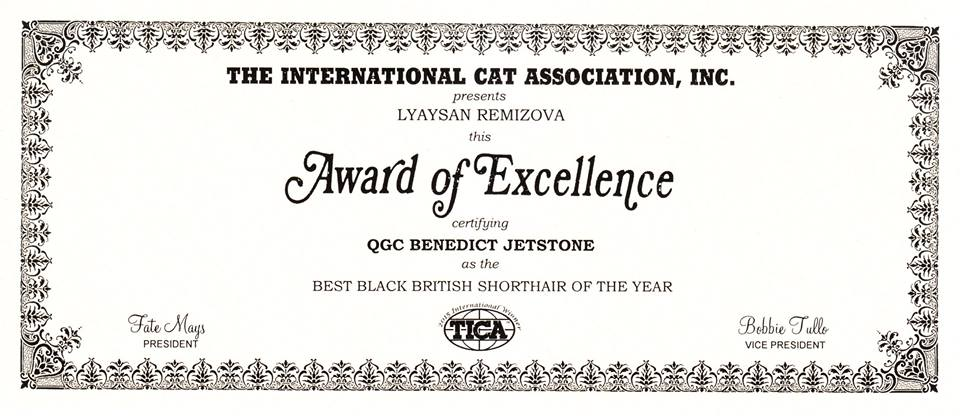 TICA BEST BLACK BRITISH SHORTHAIR OF THE YEAR