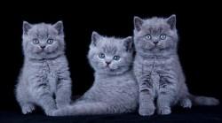 с сестрой и братом-3