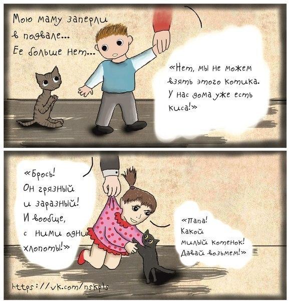 кастрация котов и стерилизация кошек