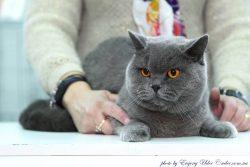BEYONCE BLUE EMPIRE OF CAT_RU
