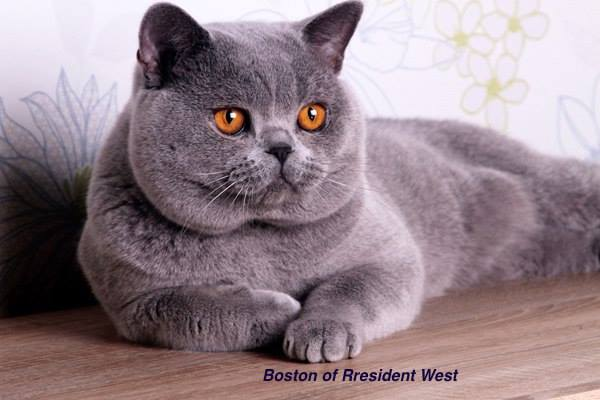 Boston of President West