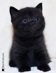 Esther-Black-1-month