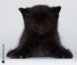 Emir-Black-1-month