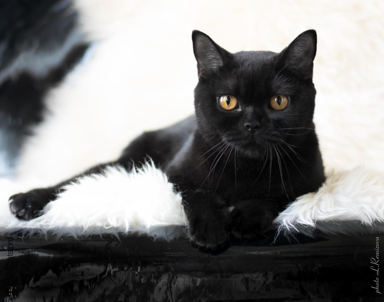 Black british female