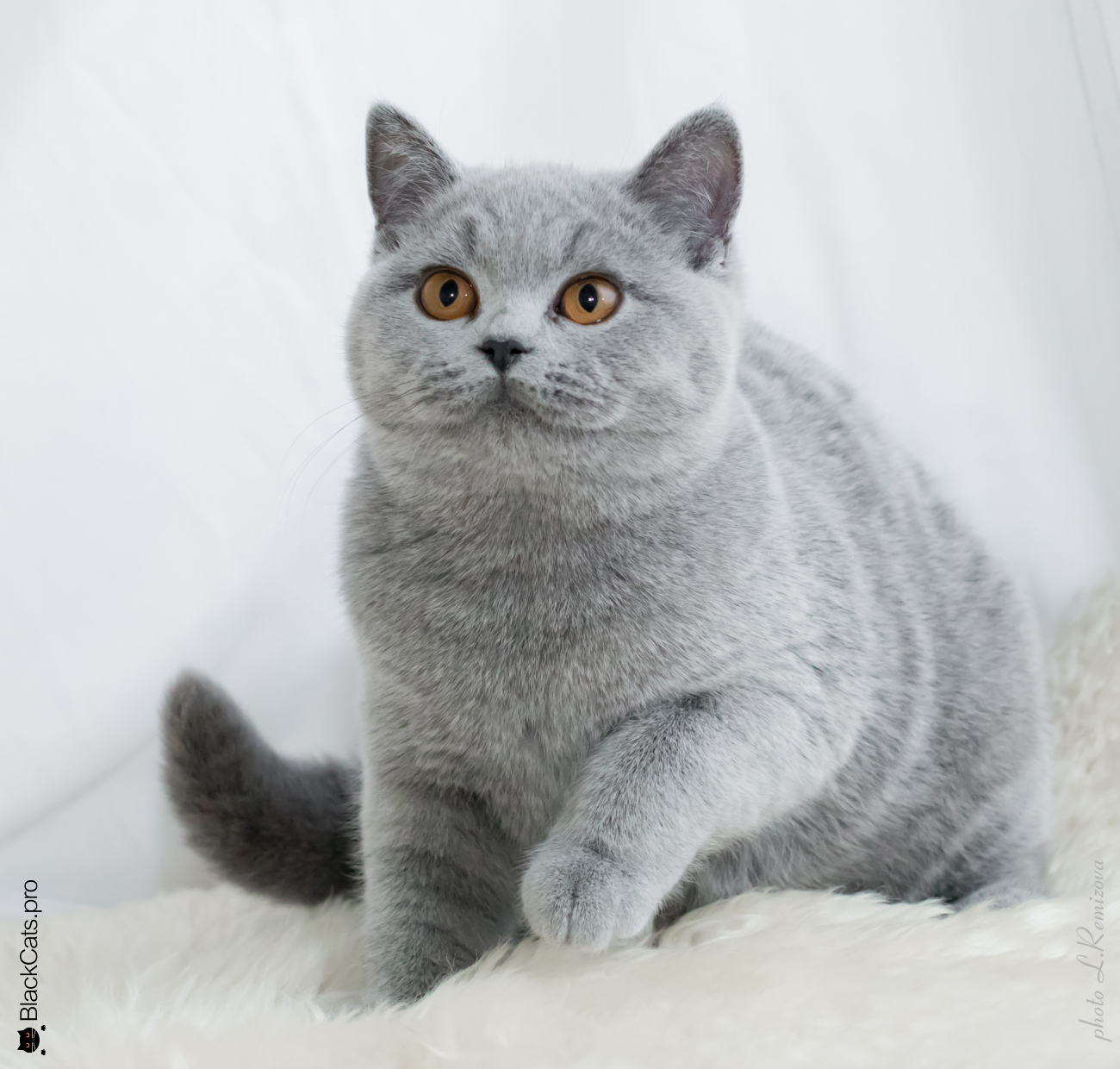 Izuminka Beauty Princess Jetstone 6 months