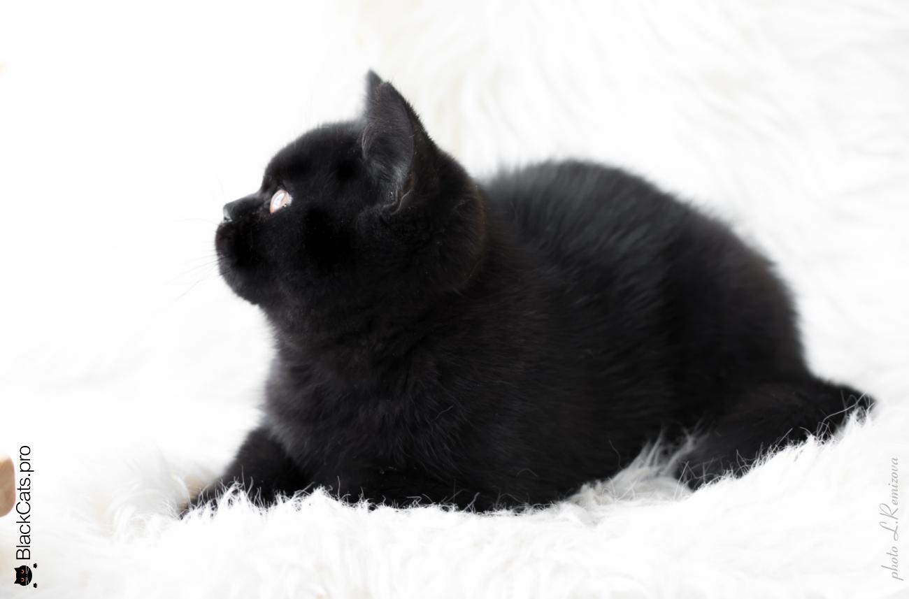 Elizabeth Baronessa Black Jetstone 3 months 15 days