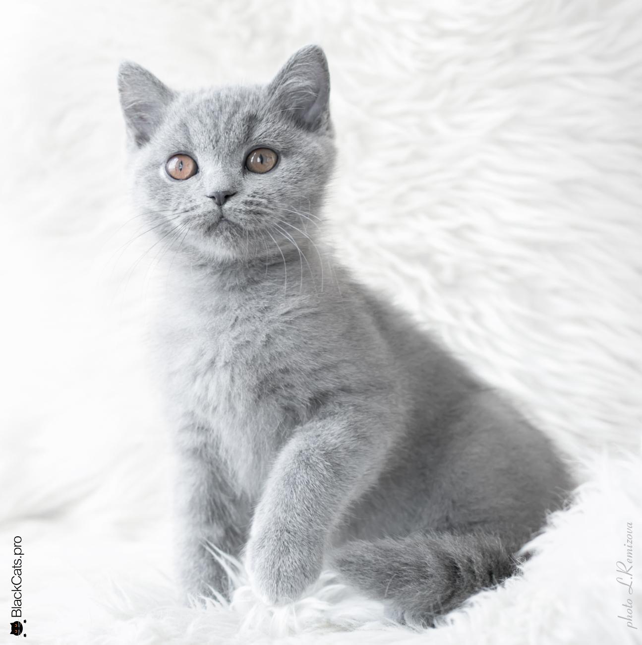 Richelieu Diamond Blue Jetstone 3 months 17 days
