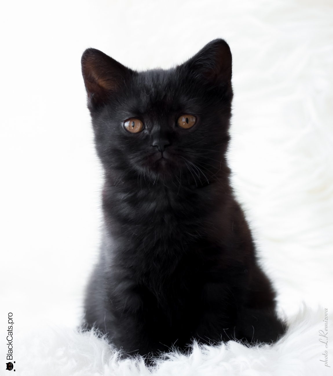 Empress Black Jetstone