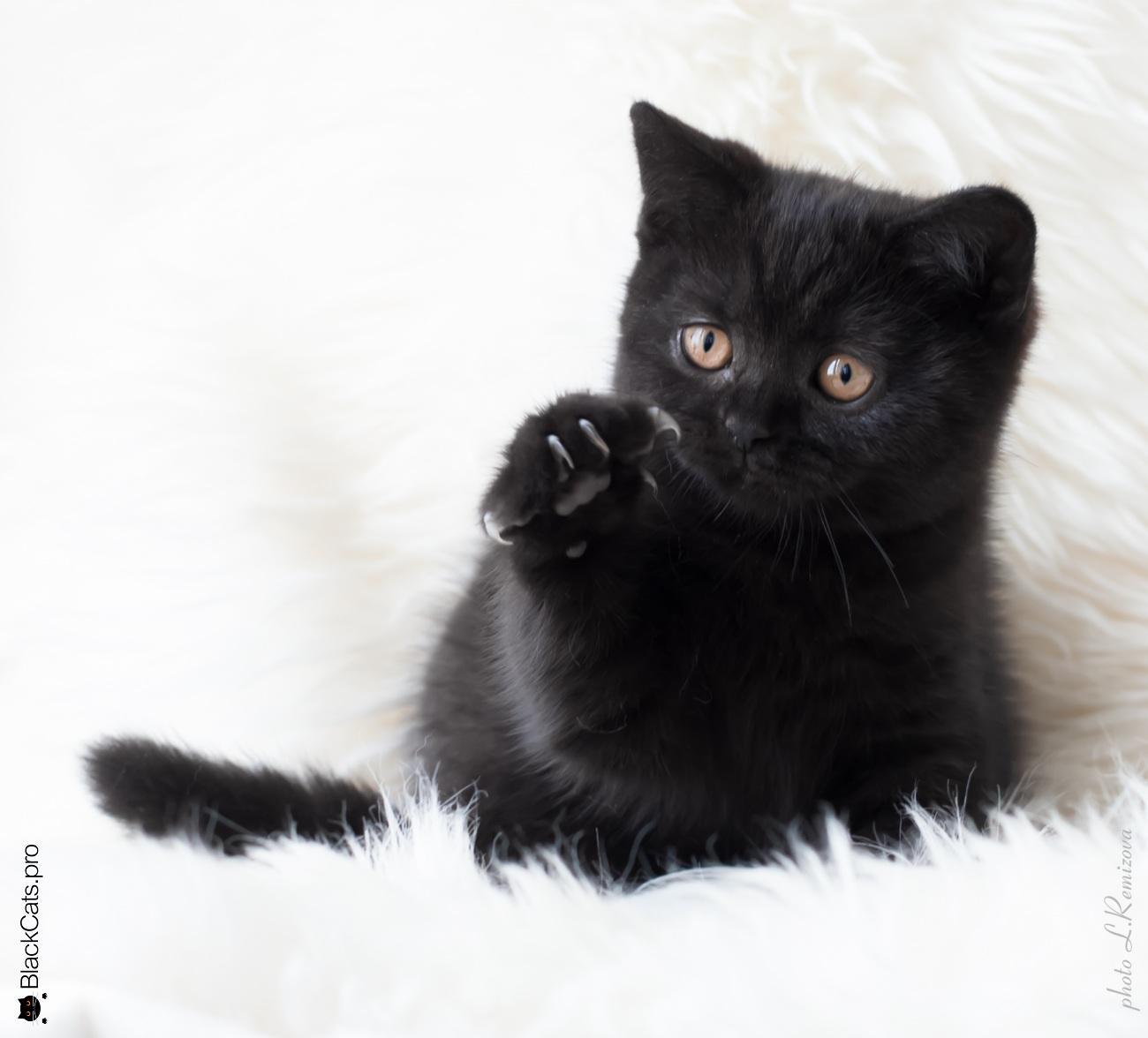 Empress Black Jetstone 3 months