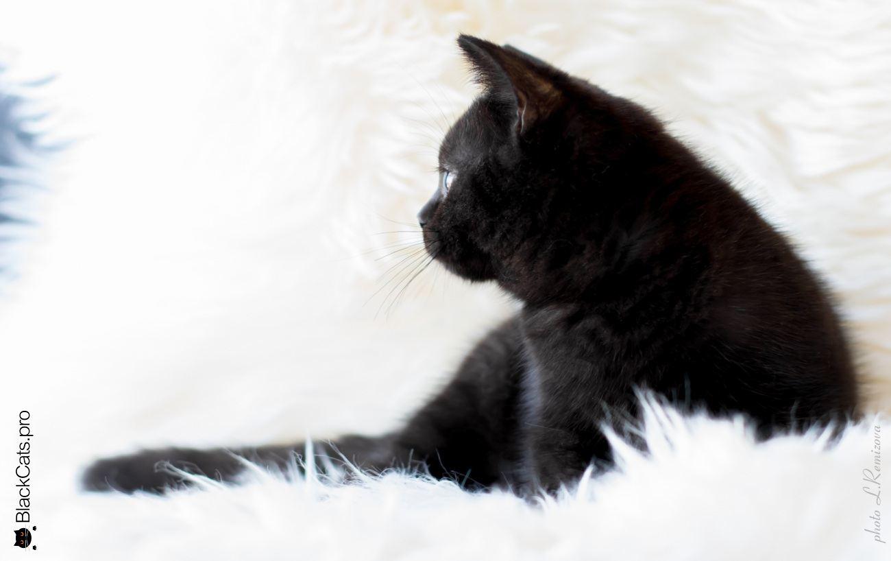 Empress Black Jetstone 3 months 14 days