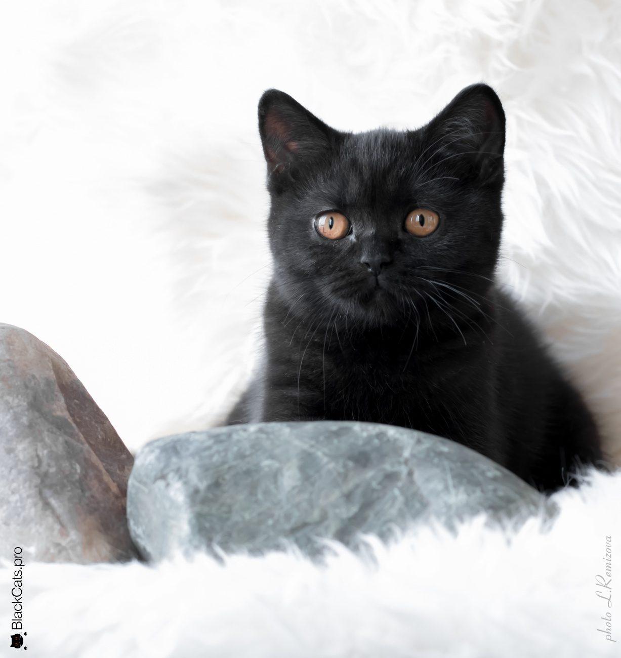 Empress Black Jetstone  4 months