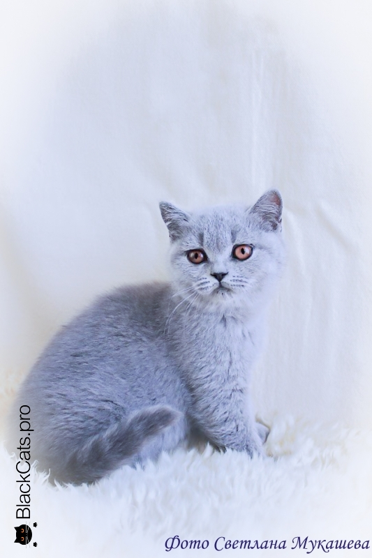 Vasilisa 3 months