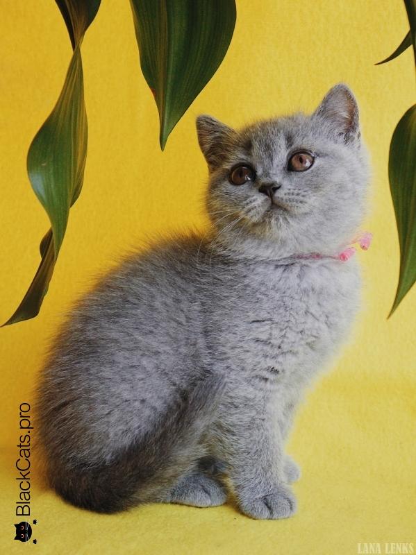 Vasilisa 2 months 6 days