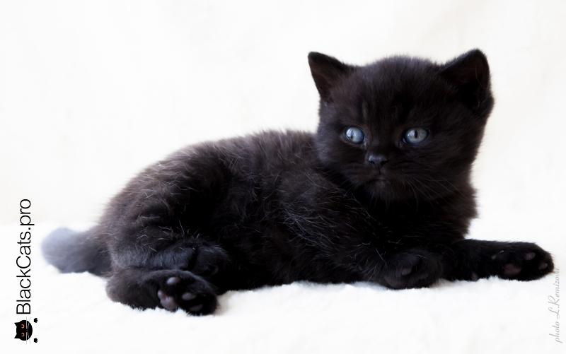 Goodwin Noble Black 1 month