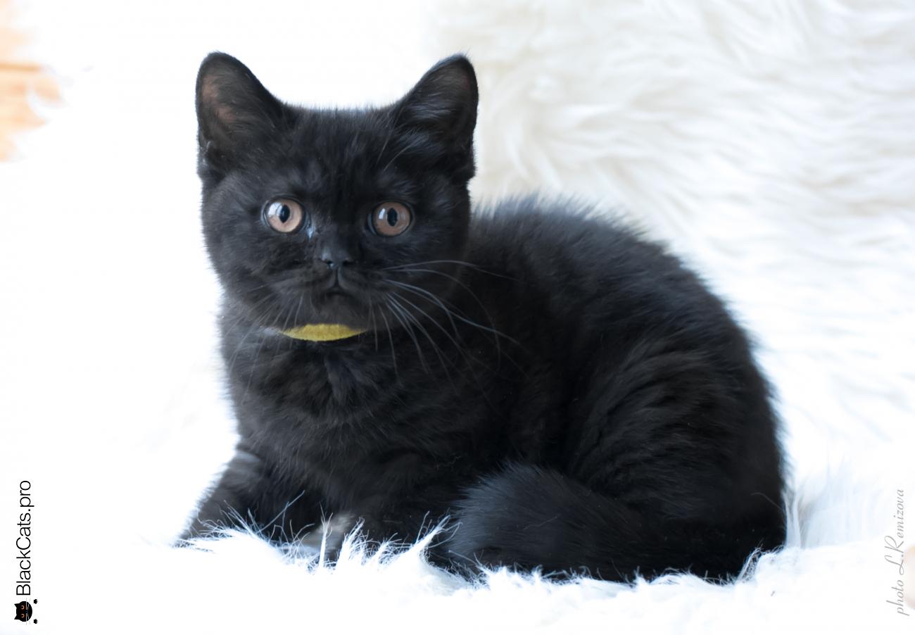 Jenny Black Jetstone 3 months