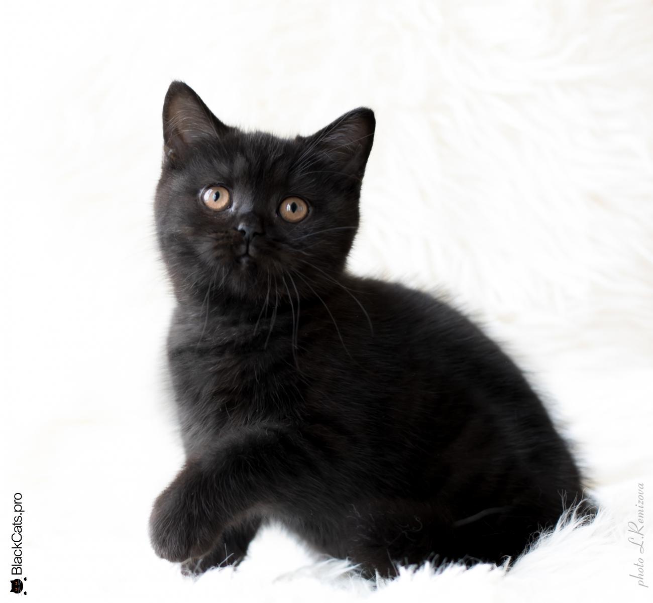 Senorita Ornella Black Jetstone 3 months