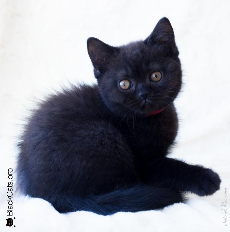 Paulina Black 2 months 16 days