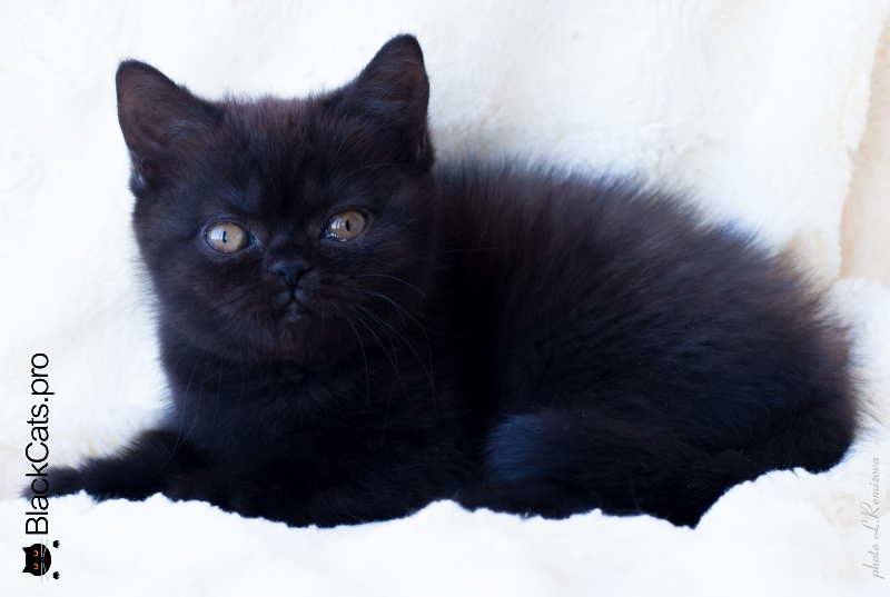 Peri Black 2 months 16 days