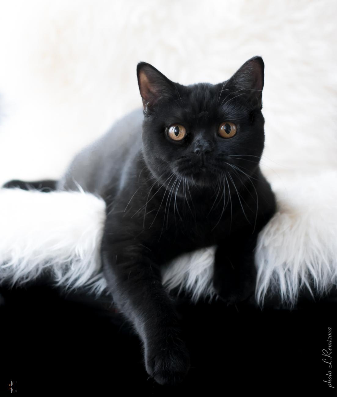Prada Black Jetstone 7 months