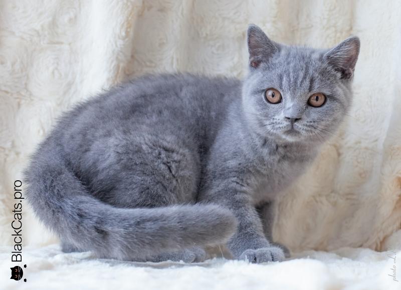 Boyarin Savva Jetstone 3,5 months