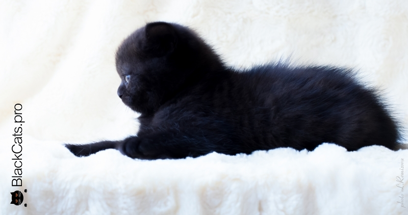 Taina Black 1 month 7 days