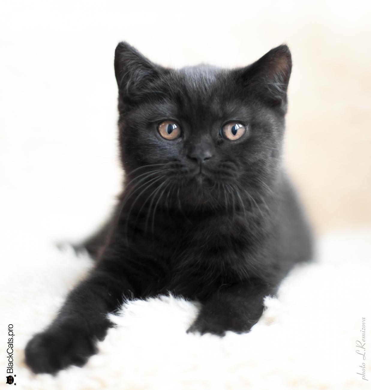 Tamerlan Black Jetstone 2 months 12 days