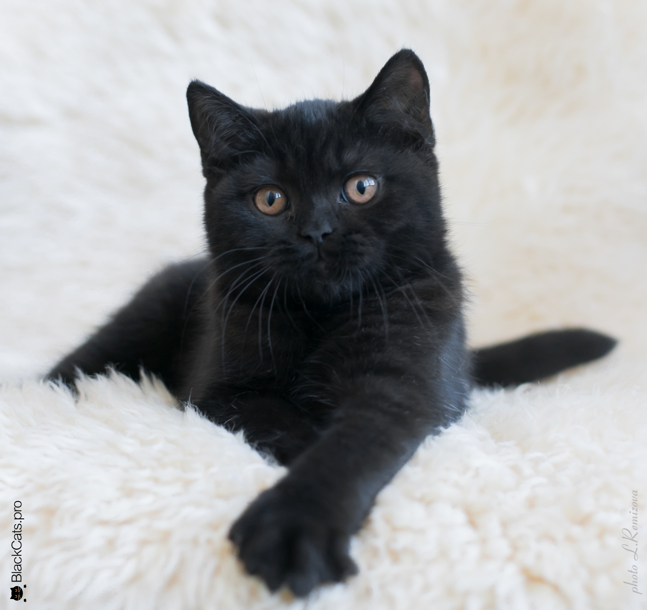 Grand Tamerlan Black Jetstone  3 months