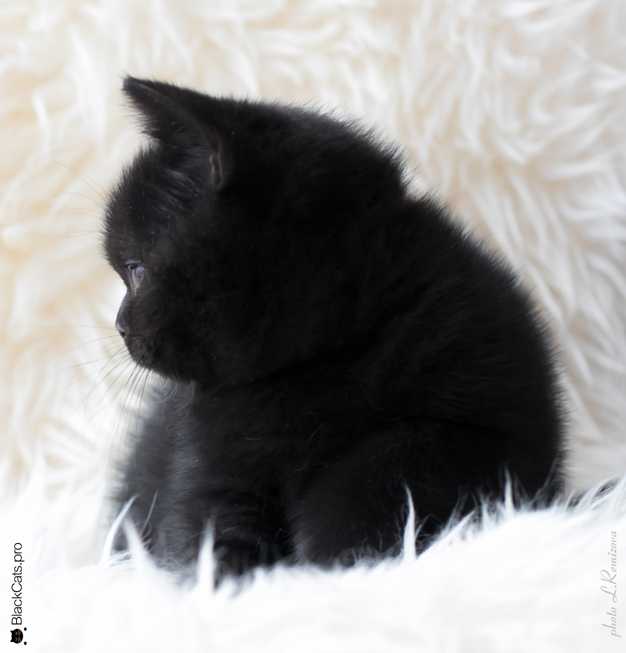 Varvara Black Jetstone 2 months
