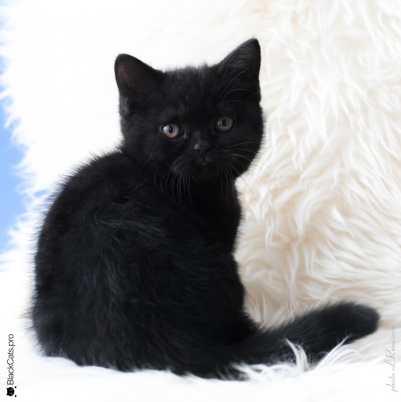 Dolce Vita Black Jetstone 2 months