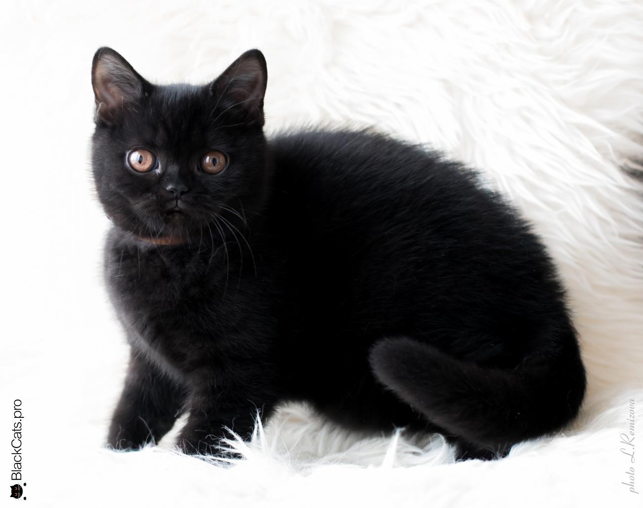 Varvara  Black Jetstone  3 months
