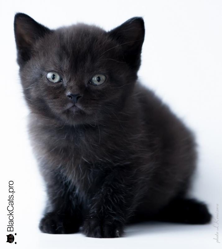 Oswald Black Jetstone 1 month 13 days