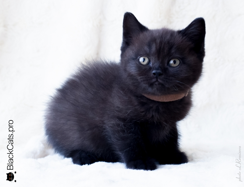 Oberon Black Jetstone 2 months