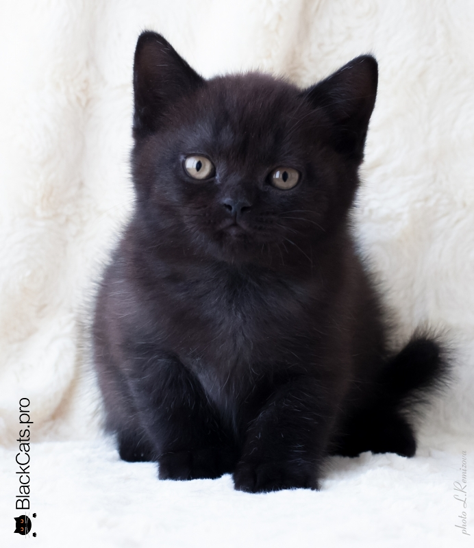 Oswald Black Jetstone 2 months