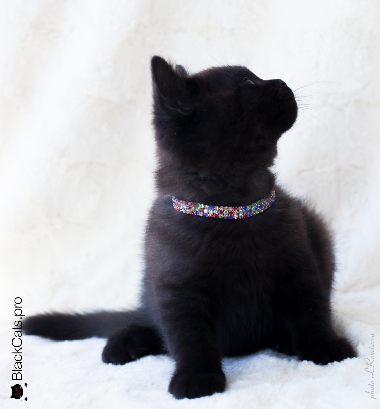 Oberon Black Jetstone 2 months 24 days