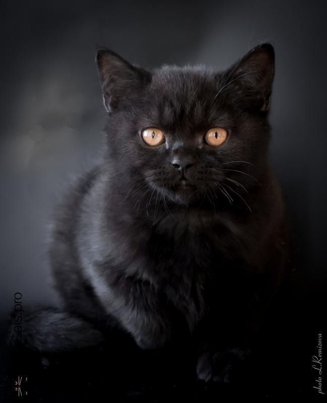 Oswald Black Jetstone 3 months 3 days