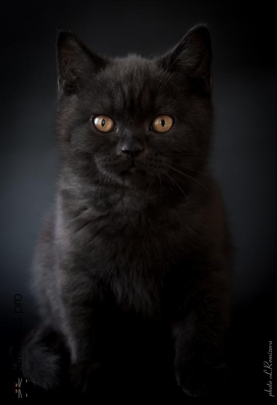 Oberon Black Jetstone 3 months 3 days