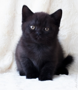 Onyx Black 2 months