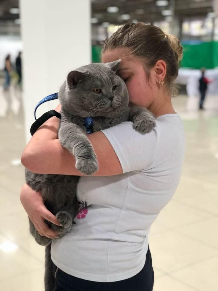 самый большой британский кот в мире